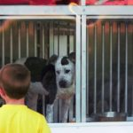 Bullet-proof barrier adds layer of safety at animal shelter
