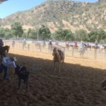 Video: Clip of cowboy hurdling calf at Memorial Roping