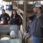 Farm Day Video: The real duck, duck, goose