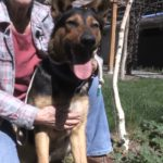 Pet of the Week: Striker the German shepherd