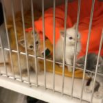 Video: Kittens available at Pet Friends