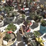Market Merchants: Succulents, anyone?