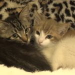 Pets of the Week: New kittens snuggle up together