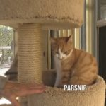 Pet of the Week: Parsnip the Cat