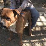 Pet of the Week: Tyson the lovable giant