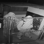 Police seek suspects who tried to steal dogs at animal shelter