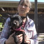 Pet of the Week: Mattie the sweet and shy terrier mix