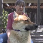 Pet of the Week: Ben the lovable Akita