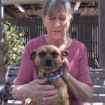 Pet of the Week: Chucky the Chihuahua