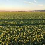 United Farm Workers issues second open letter on coronavirus impacts