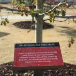 Baler Plaza walkway signs inform students about trees