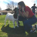 Students, teachers kiss goats and race chickens during FFA Week