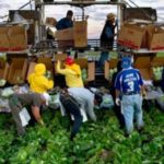 LULAC urges help for farm workers during COVID-19 pandemic